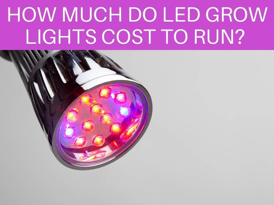 How Much Do LED Grow Lights Cost To Run?