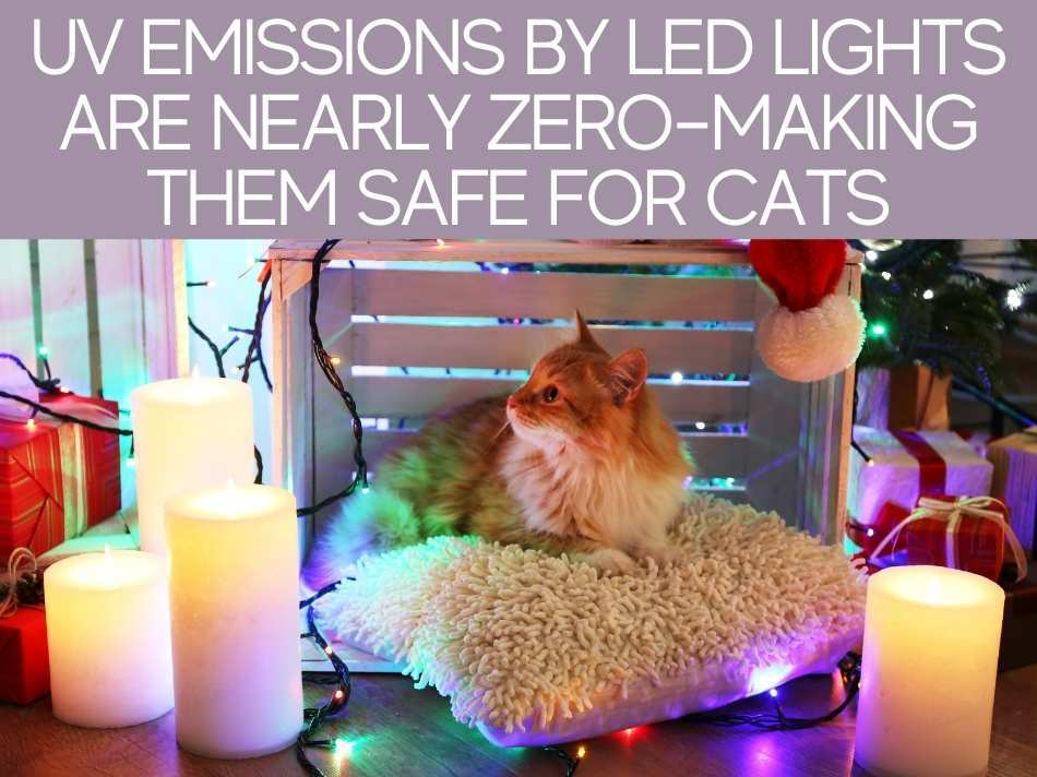 UV Emissions By LED Lights Are Nearly Zero -Making Them Safe For Cats