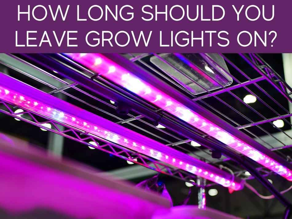 How Long Should You Leave Grow Lights On?