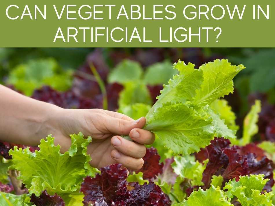 Can Vegetables Grow In Artificial Light?