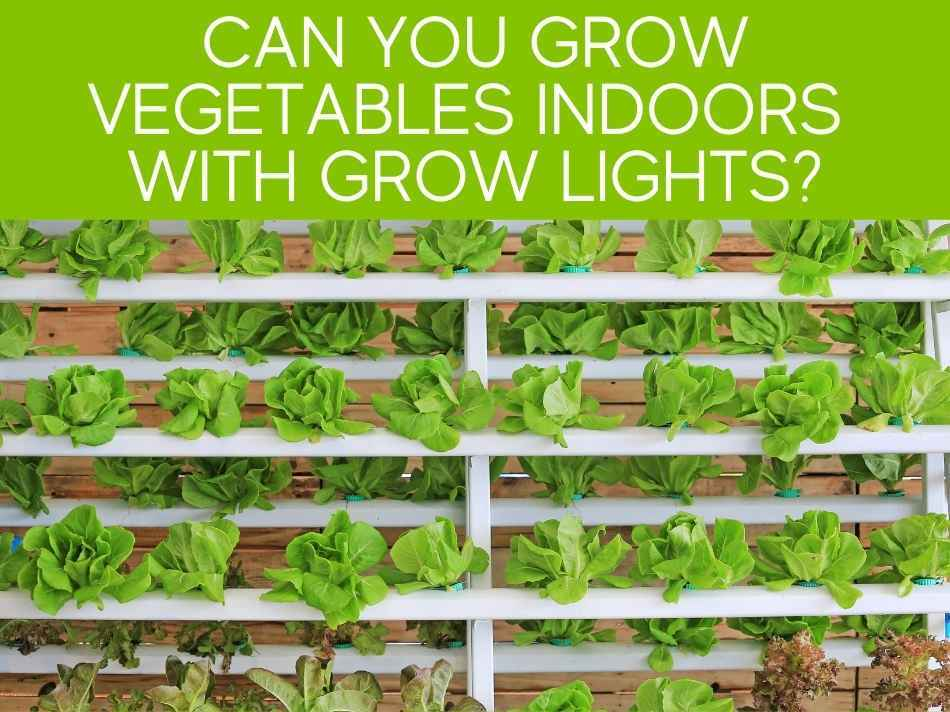 Can You Grow Vegetables Indoors With Grow Lights?