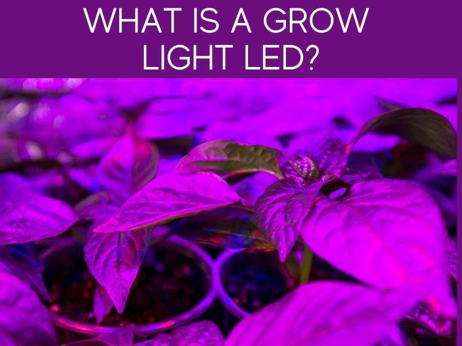 What Is A Grow Light LED?