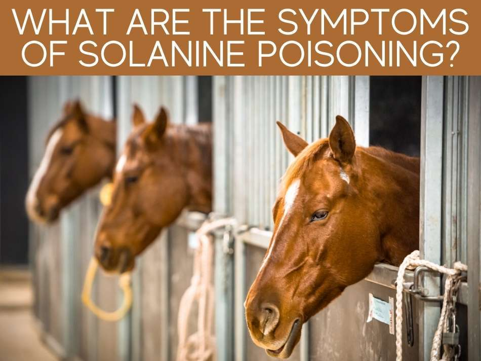 What Are The Symptoms Of Solanine Poisoning?
