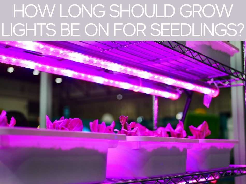 How Long Should Grow Lights Be On For Seedlings?