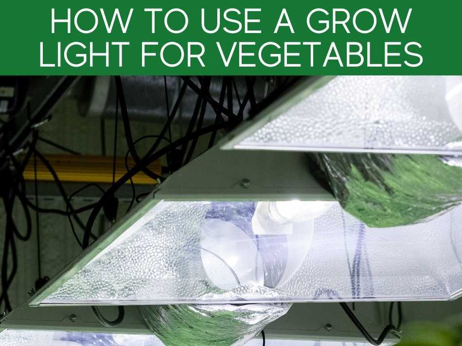 How To Use A Grow Light For Vegetable