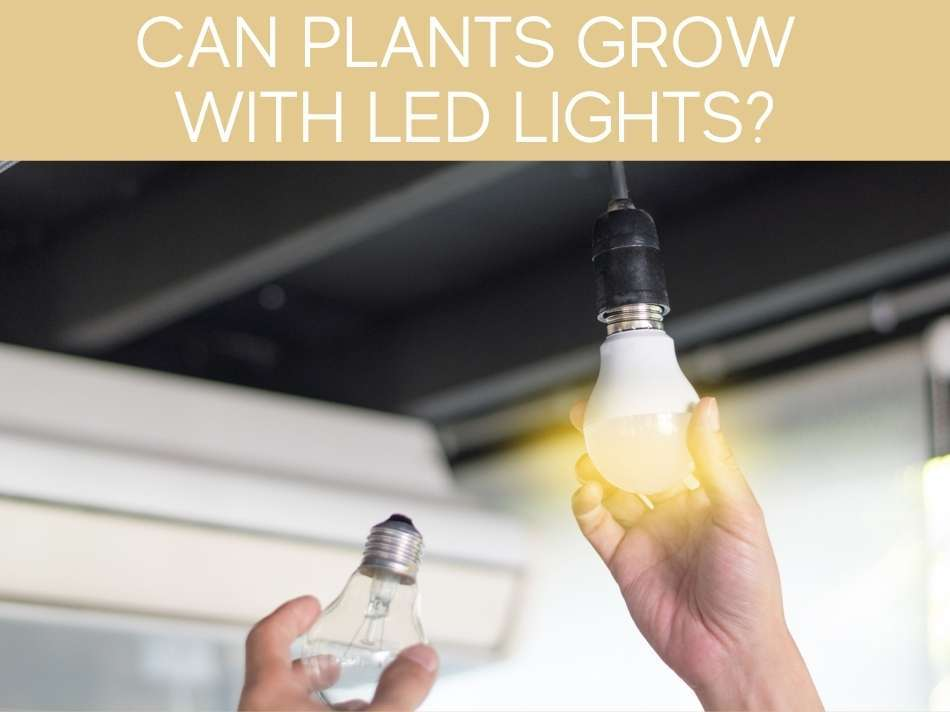 Can Plants Grow With LED Lights?