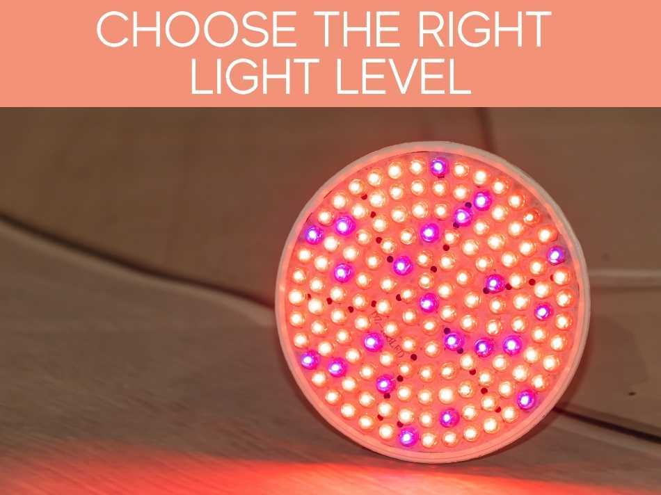 Choose The Right Light Level