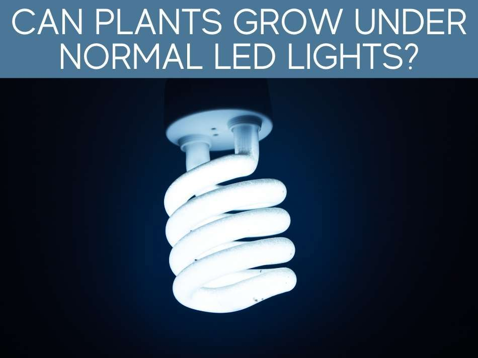 Can Plants Grow Under Normal LED Lights?