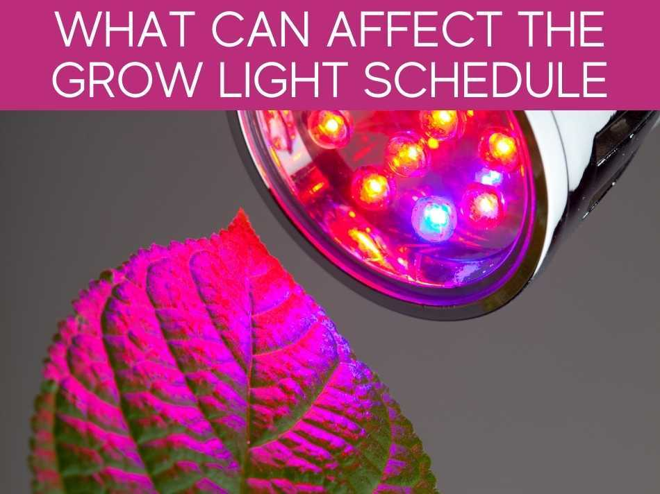 What Can Affect The Grow Light Schedule