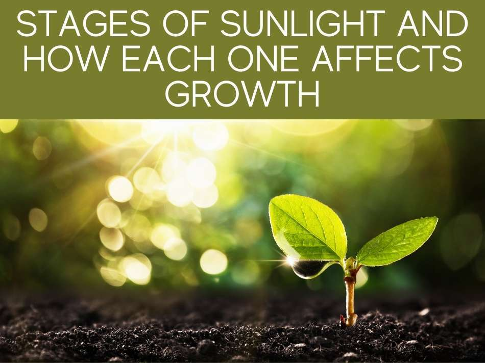 Stages Of Sunlight And How Each One Affects Growth