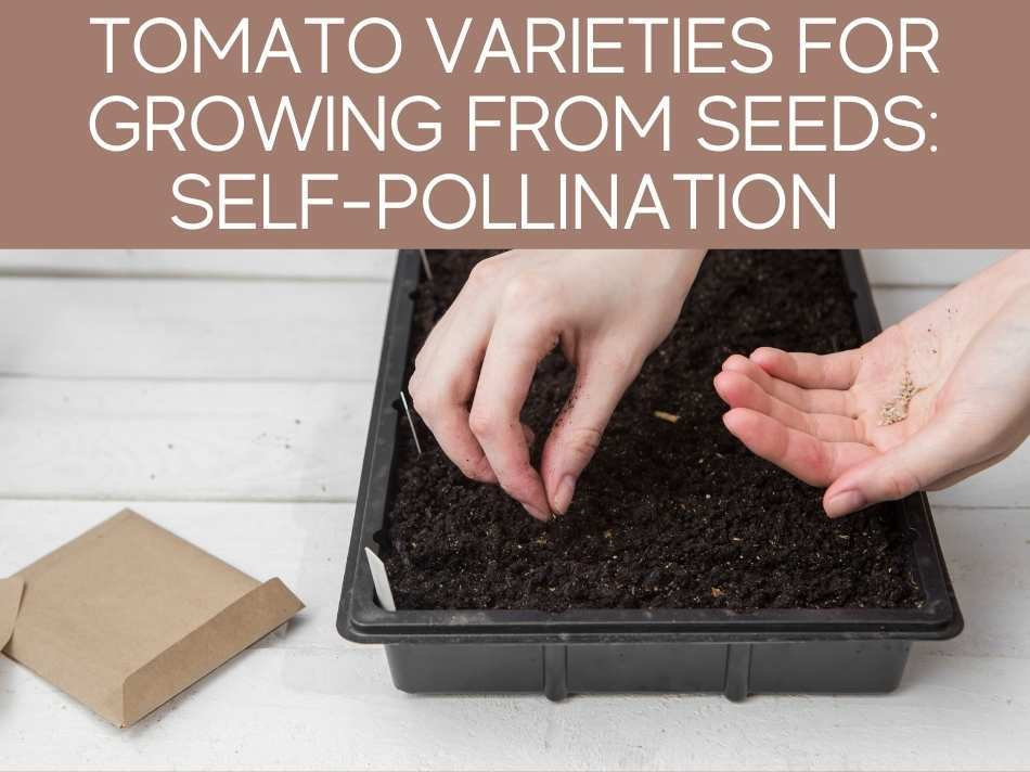 Tomato Varieties For Growing From Seeds: Self-Pollination