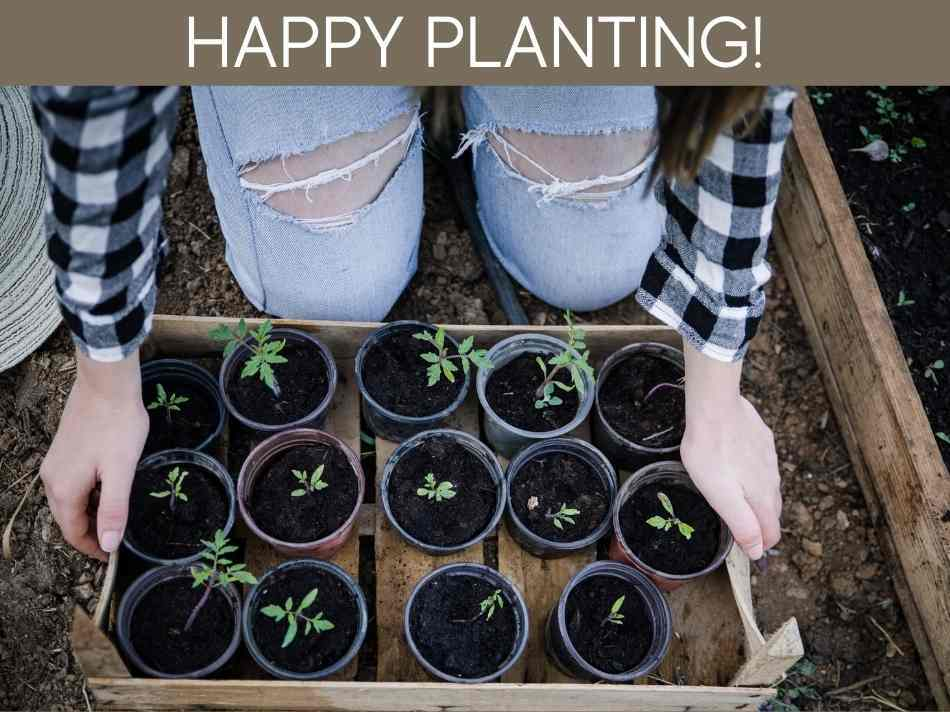 Can I Plant Fresh Tomato Seeds?