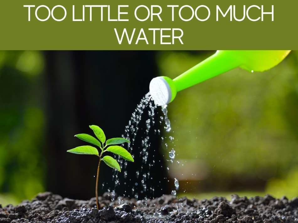 Too Little Or Too Much Water