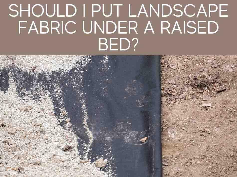 Should I Put Landscape Fabric Under A Raised Bed?