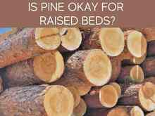 Is Pine Okay For Raised Beds?