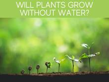 Will Plants Grow Without Water?