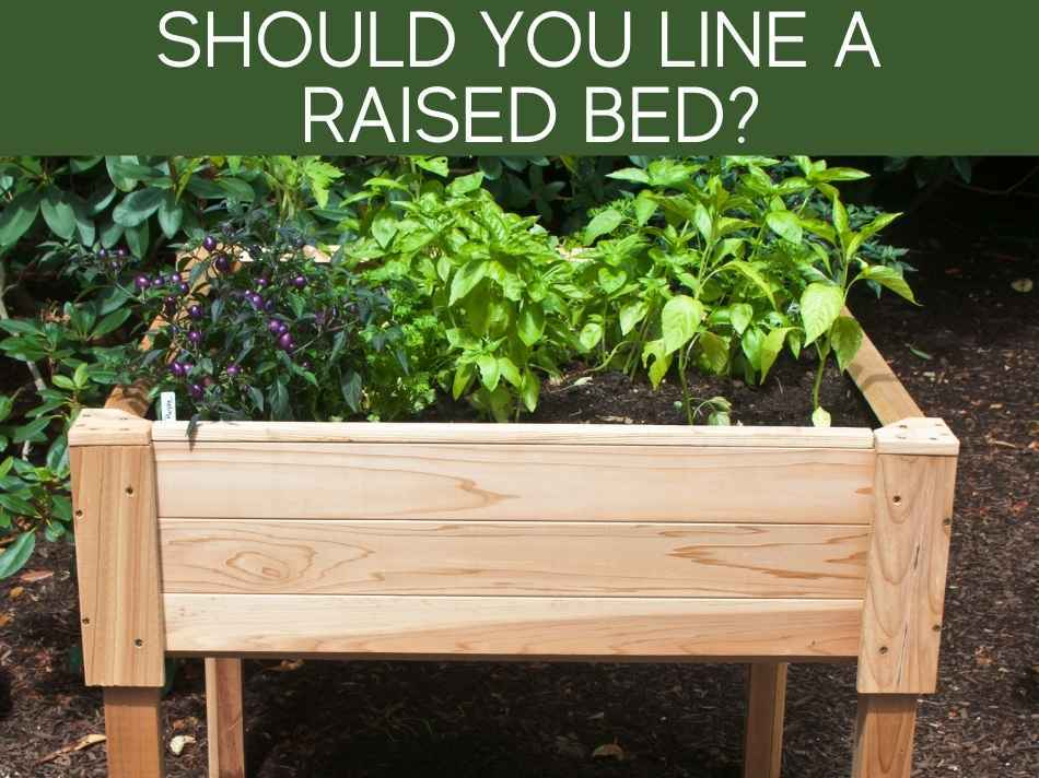 Should You Line A Raised Bed?