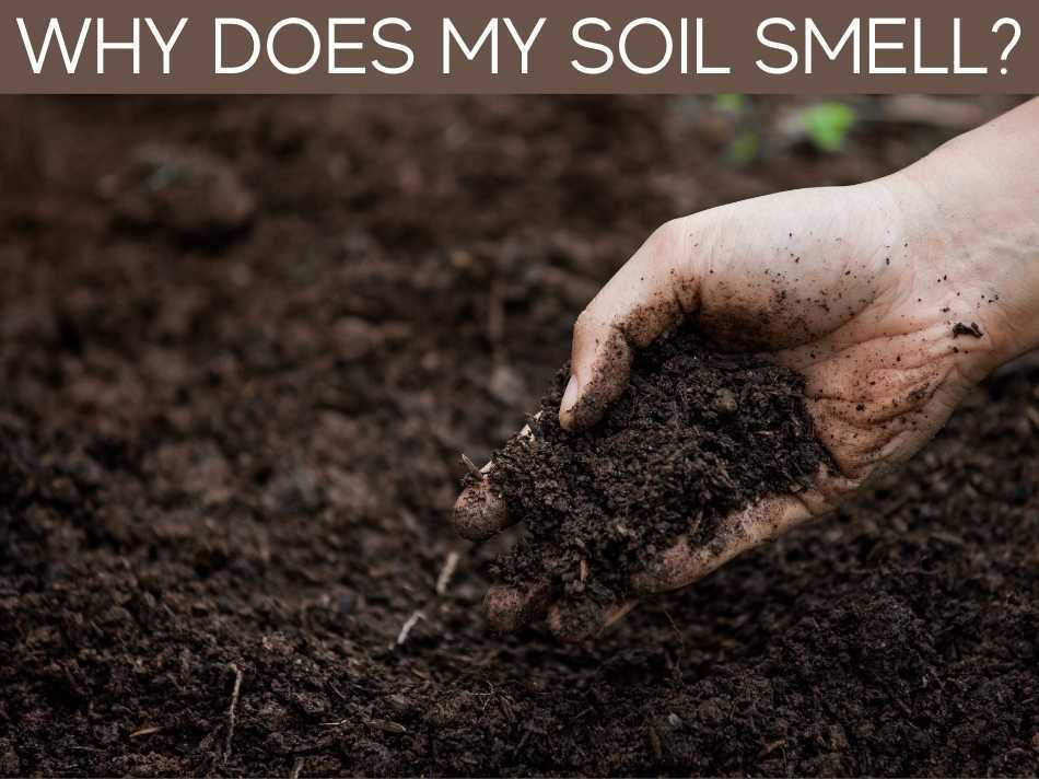 Why Does My Soil Smell?