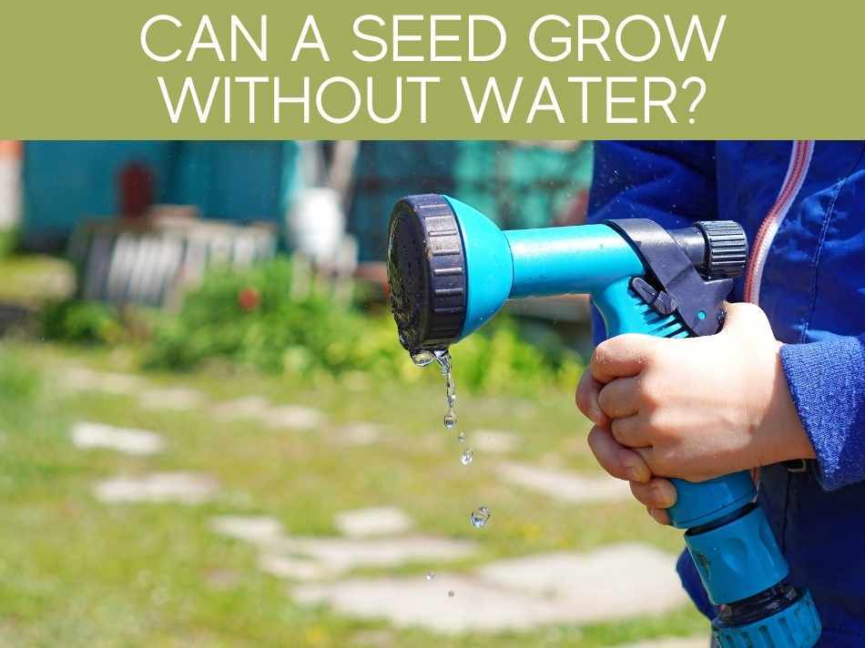 Can A Seed Grow Without Water?