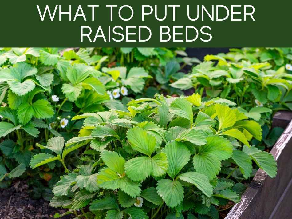 What To Put Under Raised Beds