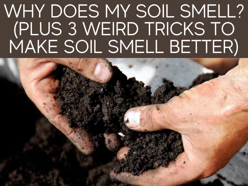 Why Does My Soil Smell? (Plus 3 Weird Tricks To Make Soil Smell Better)