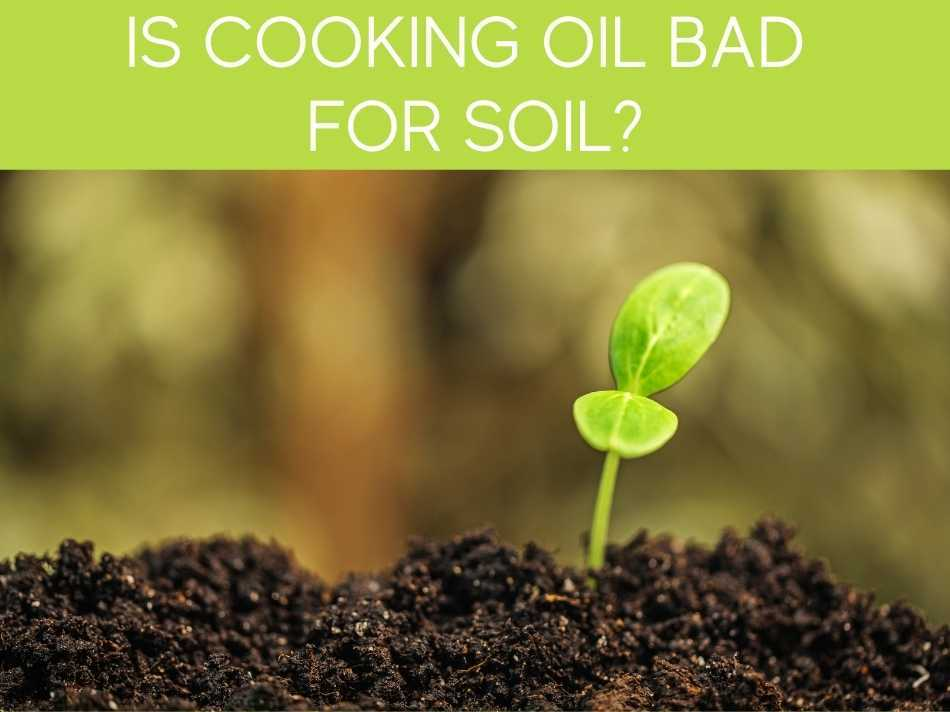 Is Cooking Oil Bad For Soil?