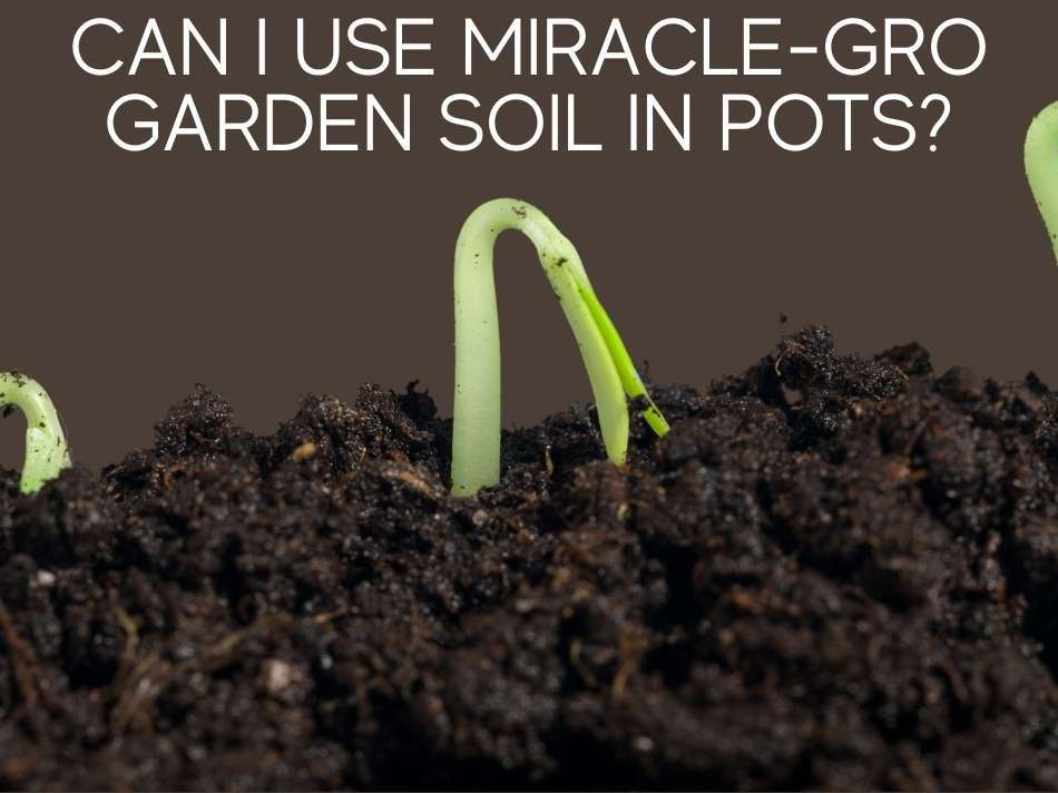 Can I Use Miracle-Gro Garden Soil In Pots?