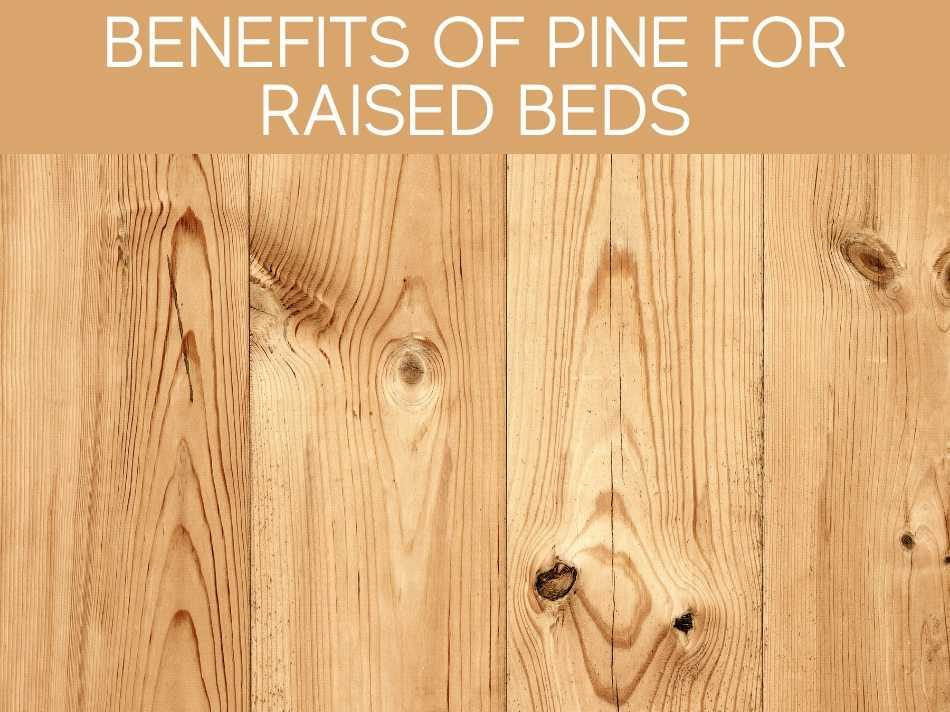 Benefits Of Pine For Raised Beds