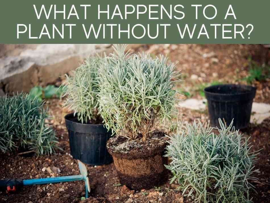 What Happens To A Plant Without Water?