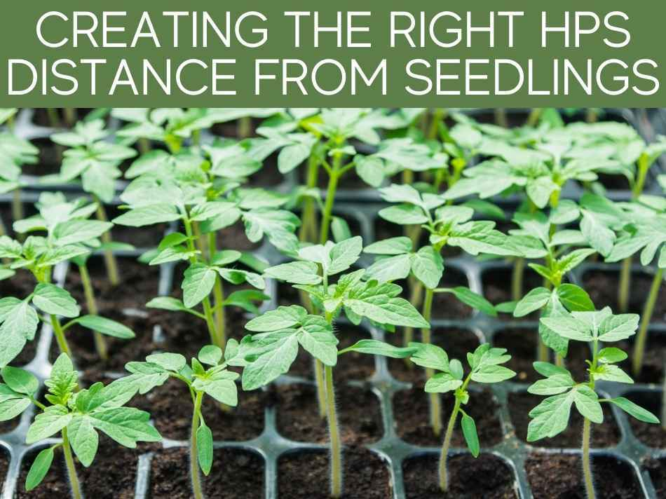 Creating The Right HPS Distance From Seedlings