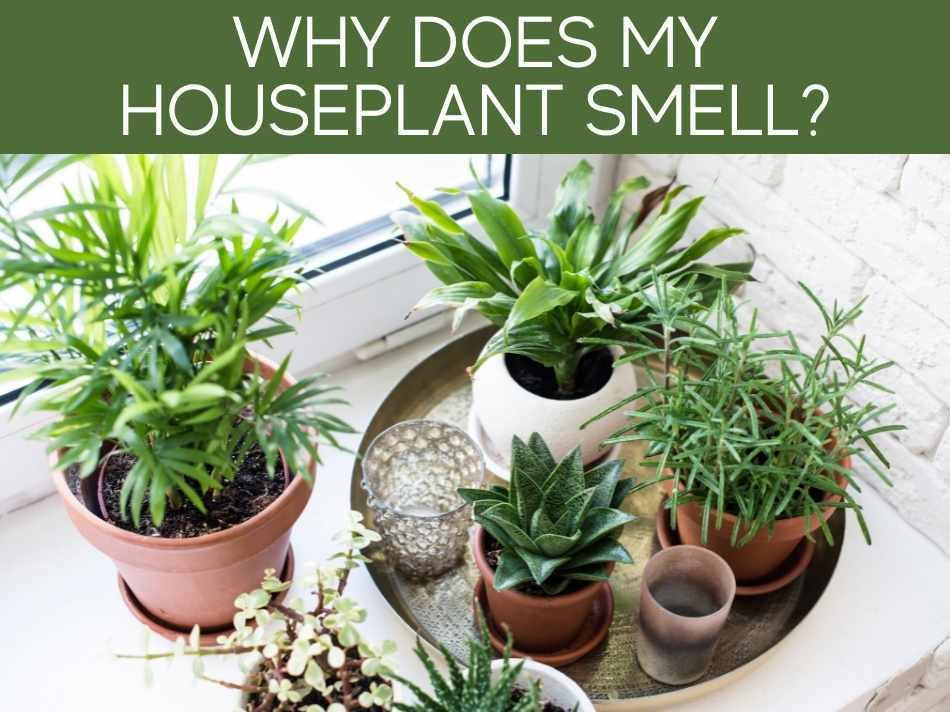 Why Does My Houseplant Smell?