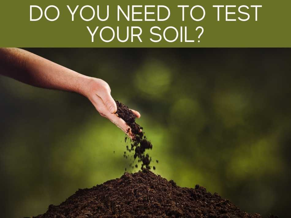 Do You Need To Test Your Soil?