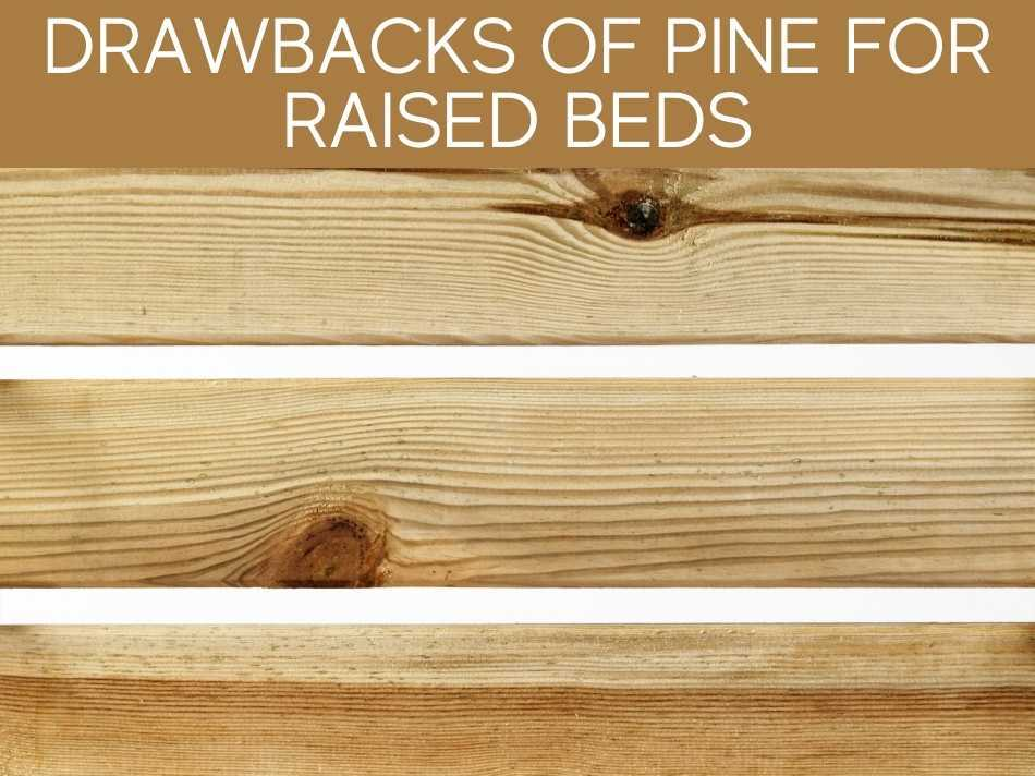 Drawbacks Of Pine For Raised Beds