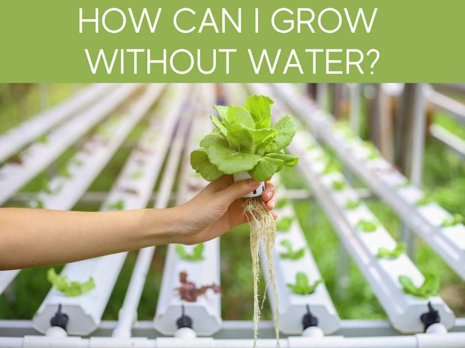 How Can I Grow Without Water?