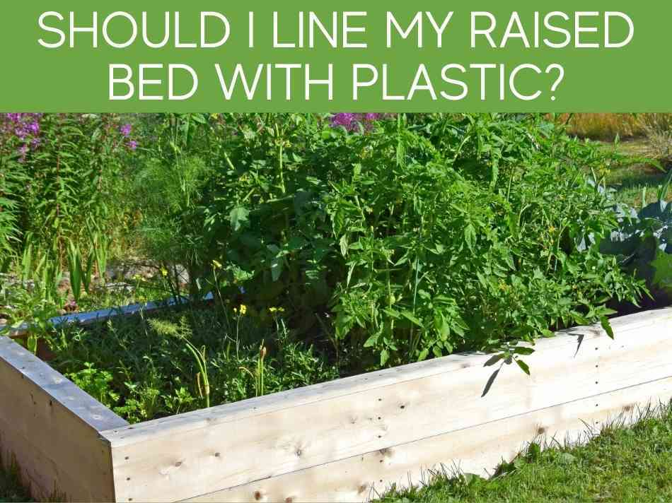 Should I Line My Raised Bed With Plastic?