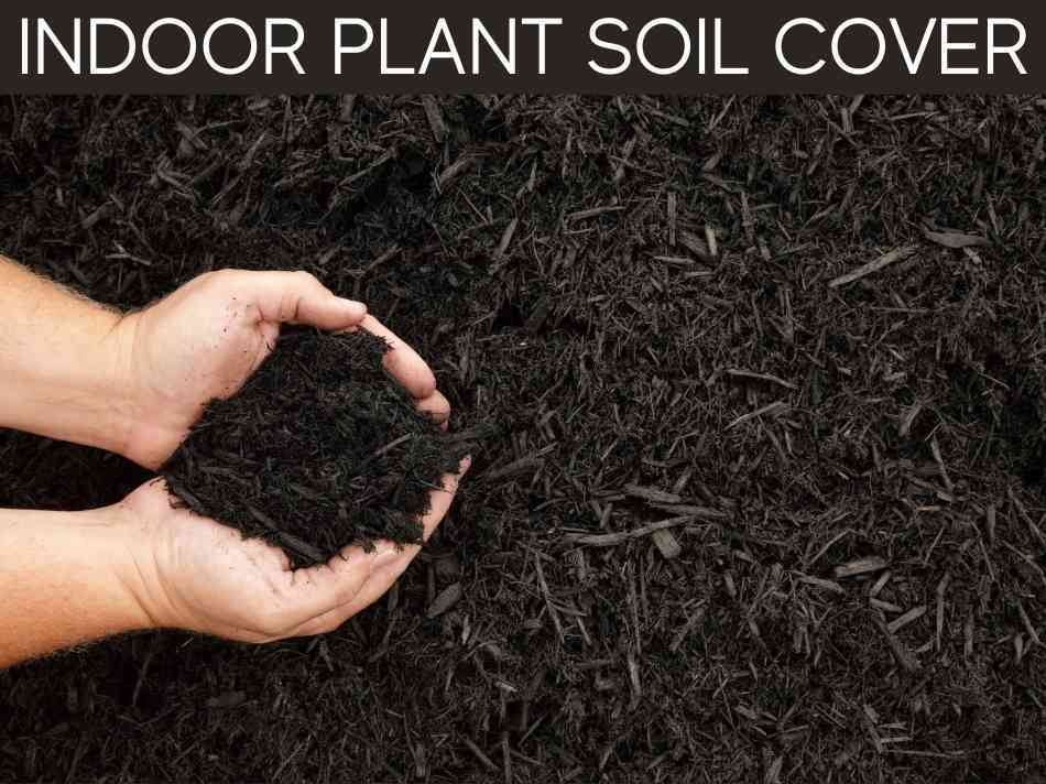 Indoor Plant Soil Cover