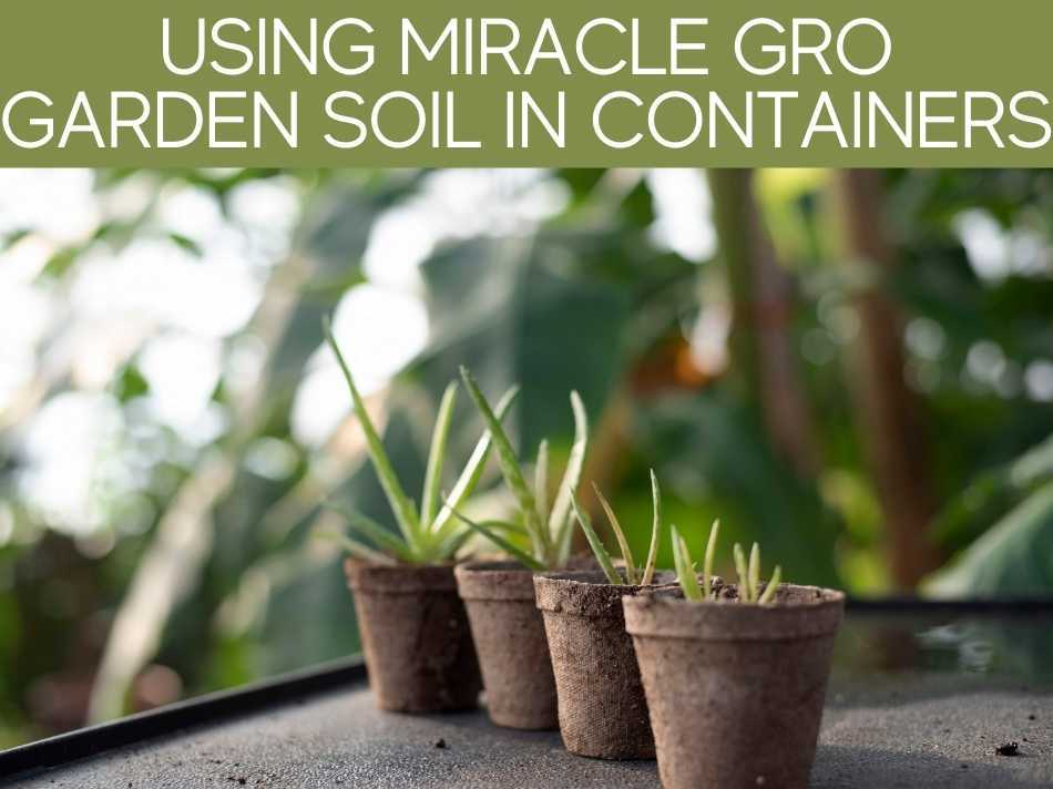 Using Miracle Grow Garden Soil In Containers