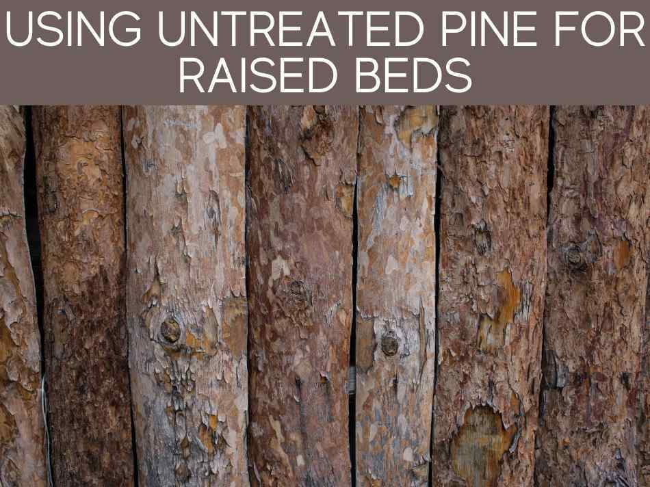 Using Untreated Pine For Raised Beds