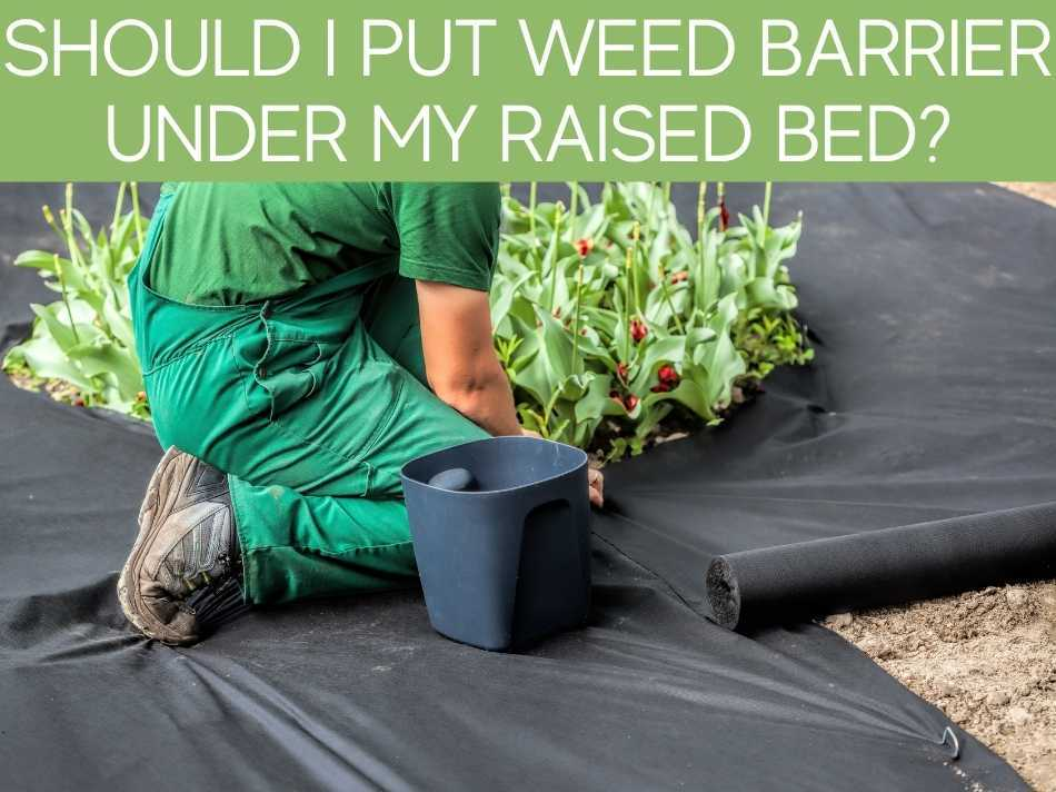 Should I Put Weed Barrier Under My Raised Bed?
