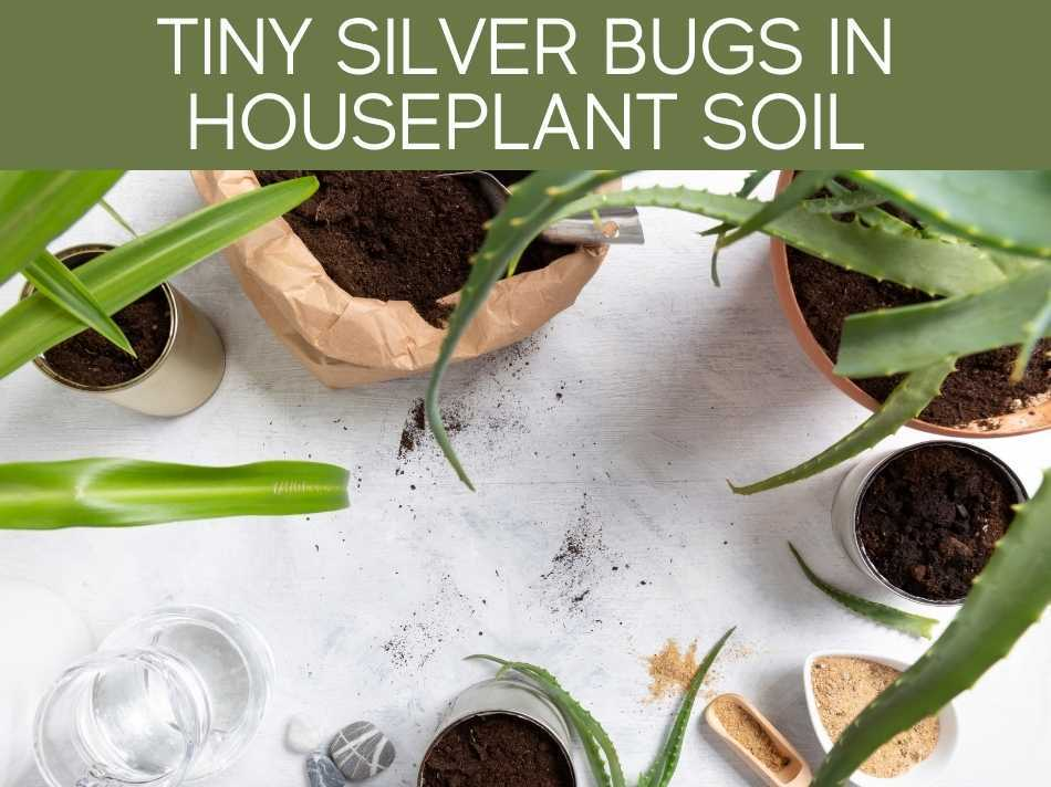 Tiny Silver Bugs In Houseplant Soil
