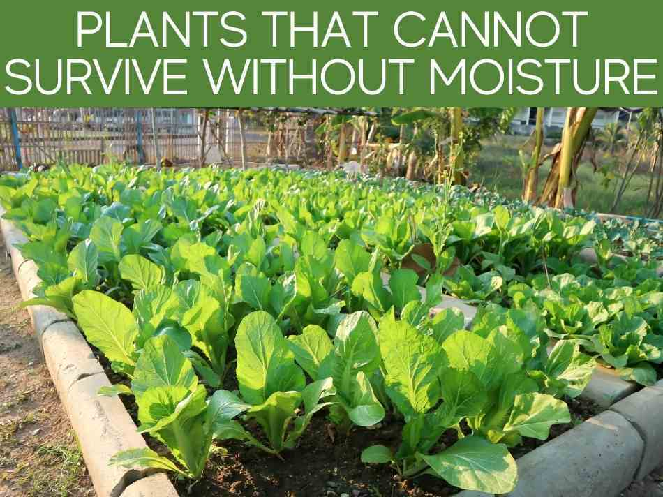 Plants That Cannot Survive Without Moisture