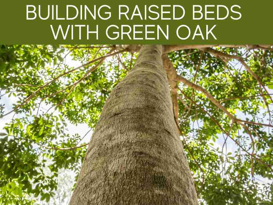 Building Raised Beds With Green Oak