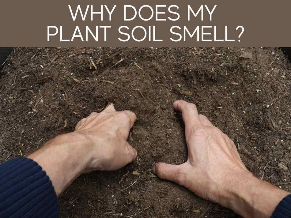 Why Does My Plant Soil Smell?