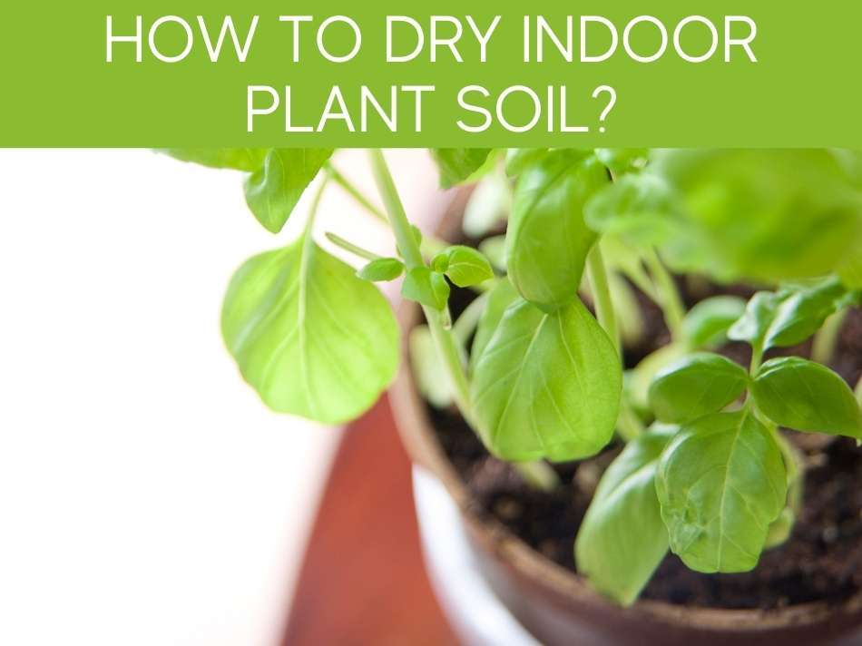 How To Dry Indoor Plant Soil?