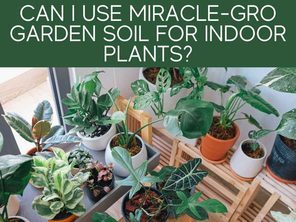 Can I Use Miracle-Gro Garden Soil For Indoor Plants?