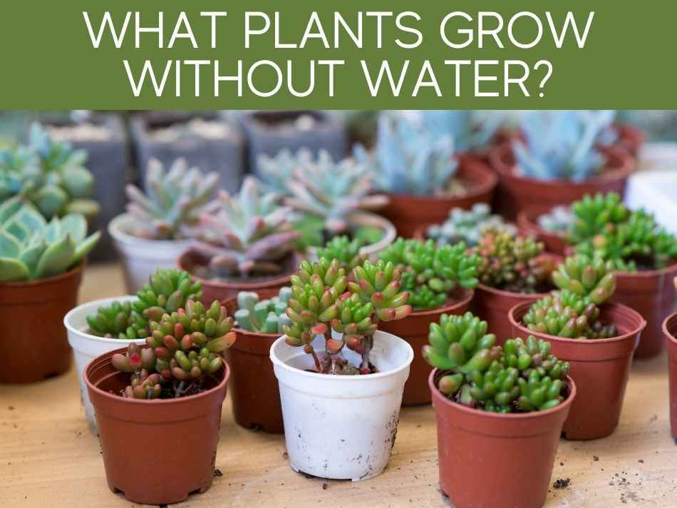 What Plants Grow Without Water?
