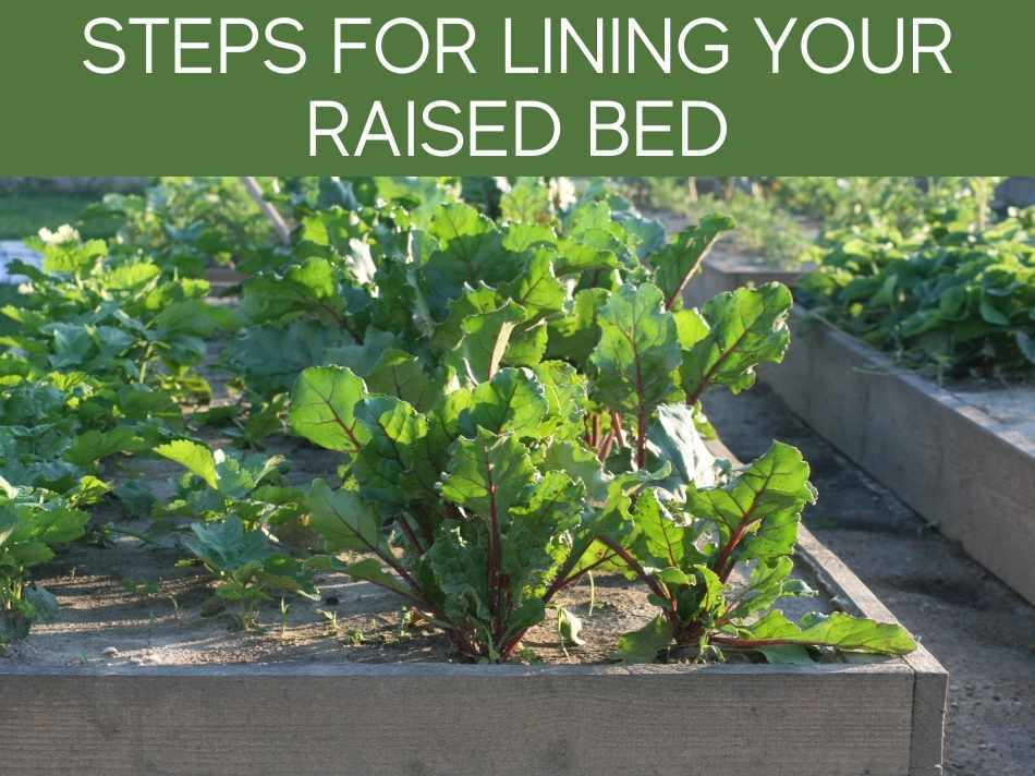 Steps For Lining Your Raised Bed