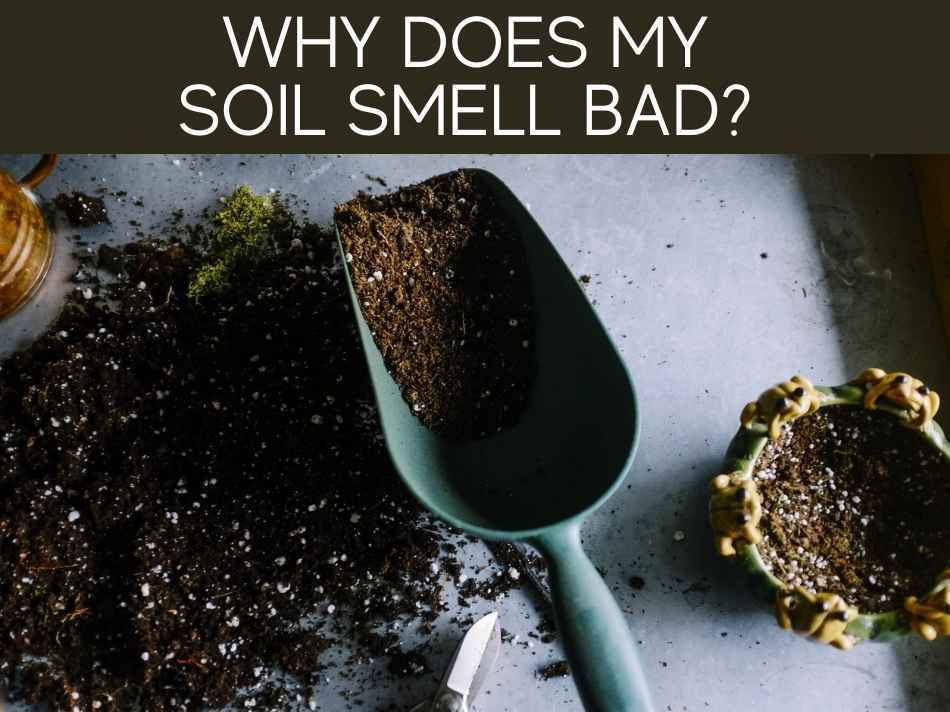 Why Does My Soil Smell Bad?