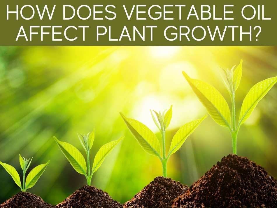 How Does Vegetable Oil Affect Plant Growth?