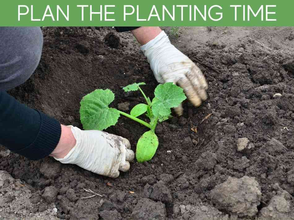 Plan The Planting Time